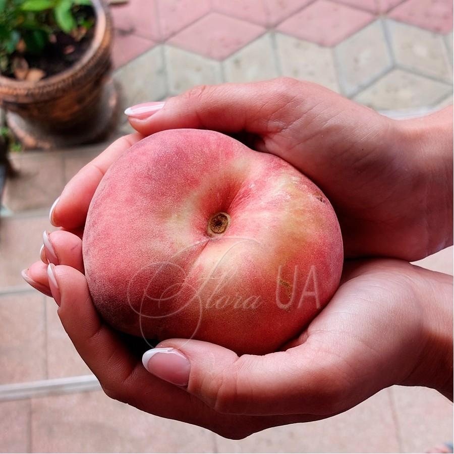 Персик инжирный (плоский) Пинк Ринг