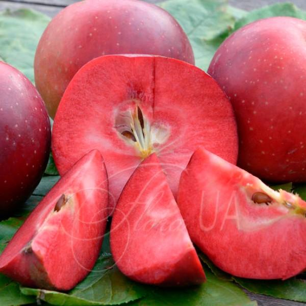 Яблоня красномякотная Байя Мариса